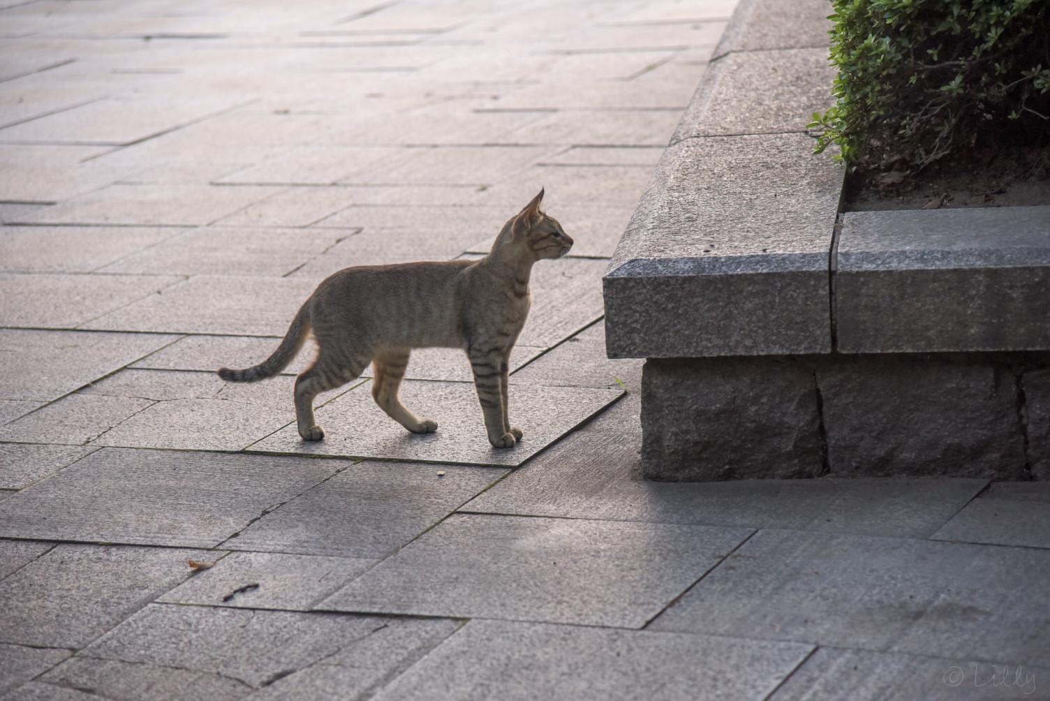 広島の野良猫