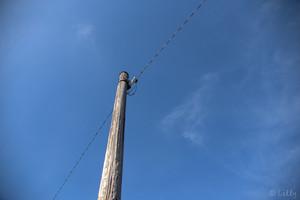 双海の電柱