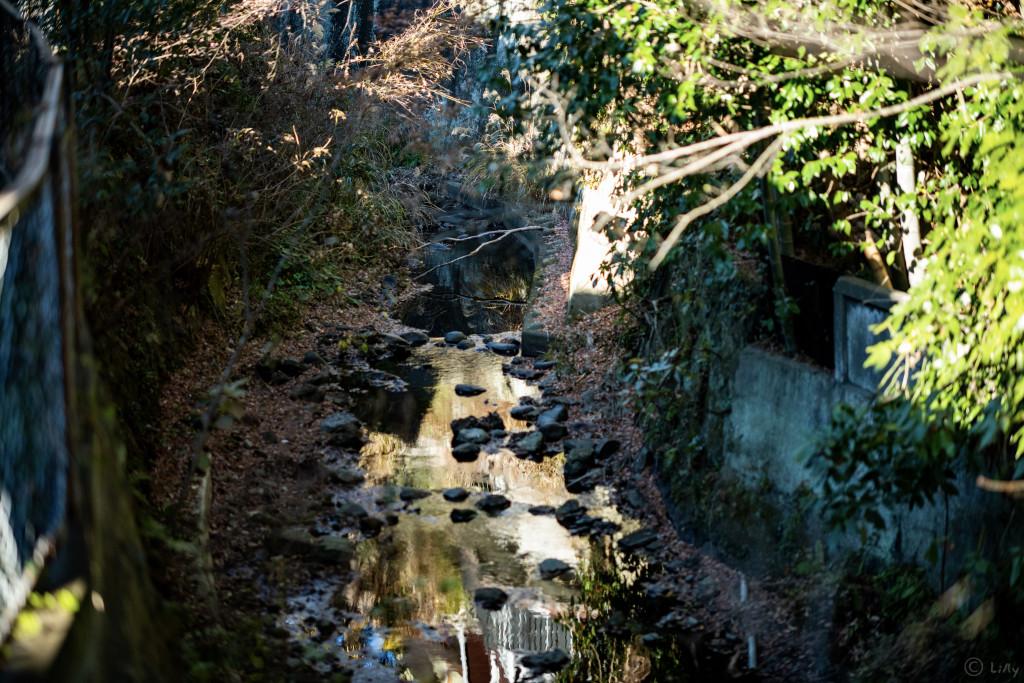 静謐な川の写真