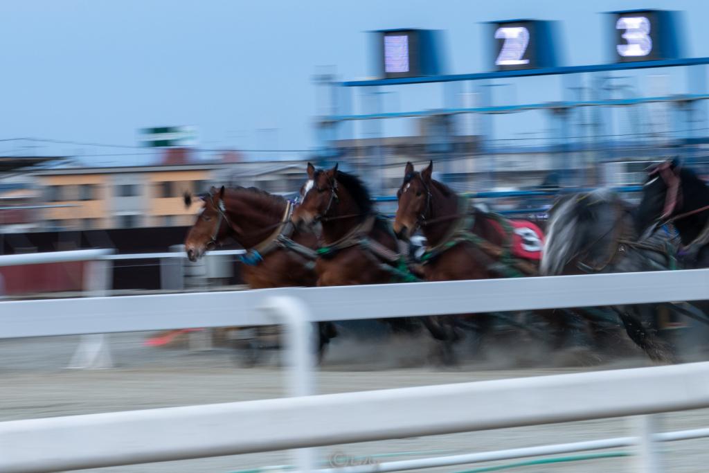 ブレブレの馬の写真