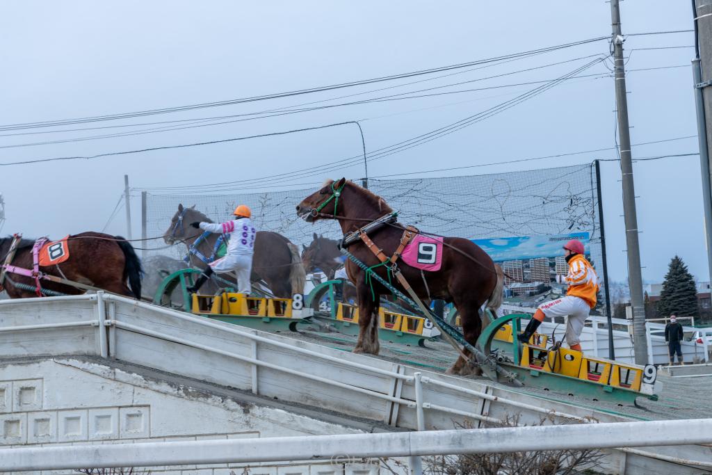 坂道で休む馬